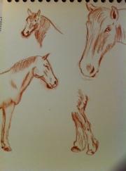 horses conte