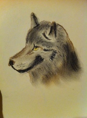 pastel wolf